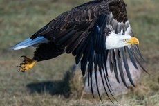 What the Eagle Stands For