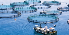 Aquaculture Market Future Opportunities Recorded for the Period until 2030