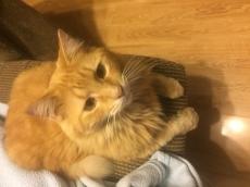 "SANDY ""O' MATCH MAKER CAT"