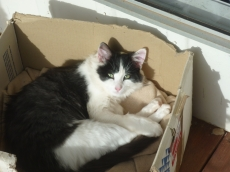 My Cat Hates the Glockenspiel