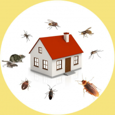 Pest Control Market Global Demand, Trends and Precise Outlook 2020 to 2030