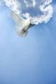Fight, Flight or Fulfil