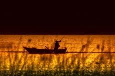 Something Fishy in Gill-Man Lake