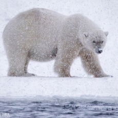 The Tale of The Arctic