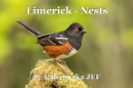 Limerick - Nests