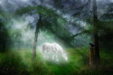 Unicorns, No Reorders
