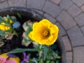5 Easter Poems
