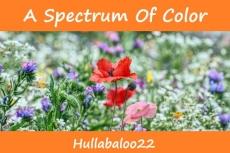 A Spectrum Of Color