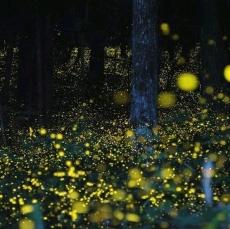 Sea of Fireflies