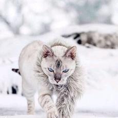 The Snow in Shangri-la