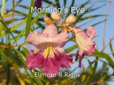 Morning's Eye