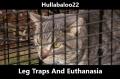 Leg Traps And Euthanasia