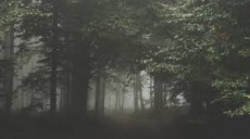 Forest Full With Dark Leaf (Chapter 1)