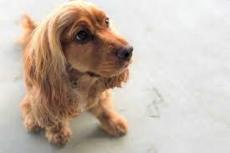 Madrid - anuncios clasificados de animales en venta, productos, alimentos, juguetes y accesorios - mascotas