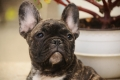 3 key points in puppy nutrition