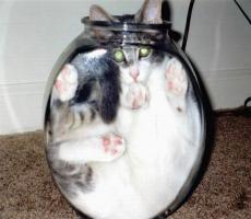 Fish vs. Cats!!!!