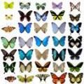 _My Butterfly Wings_ (Angellyn's poetry contest: Another Poetry Chalenge)