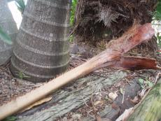 a broken branch