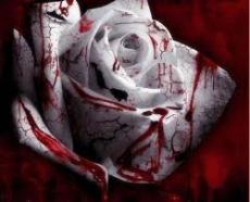 My Bloody Rose