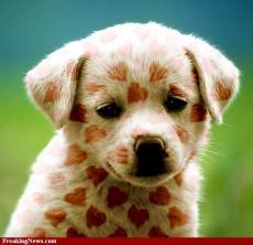 Puppy Love, Kitty Hate