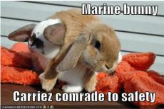 Marine Bunny