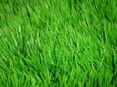 GRASS  (rorgon94's  awesome challenge)