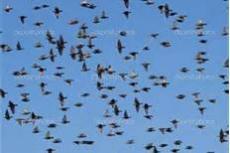 Bye Bye Birdies