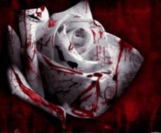 Cherry Blood