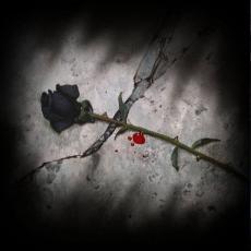 *The Black Rose