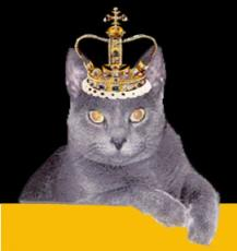 His Highness the Cat