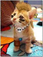 KittyKallous333