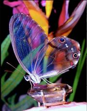 The Beaded Butterfly