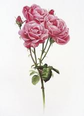 Anna Elizabeth Rose