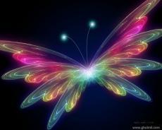 ButterflyRose