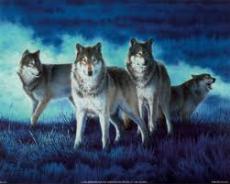 wolfmad112255