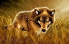 demotic wolf
