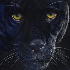 BlackLeopard259