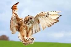Owlwoman48