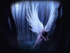 Fallen Angel xoxo