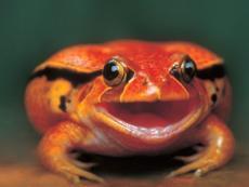Frog2235