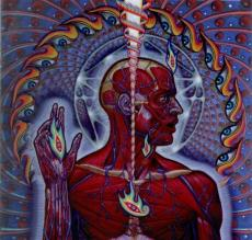 Lateralus462