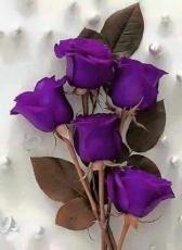 Violet022
