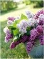 Lilac Notepad