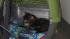 Twitchycat