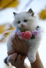 KittyCatLover