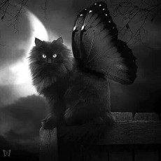 KittyTyper