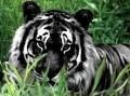 Black.Cat343