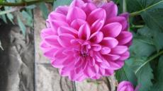 LadyBlossom1086