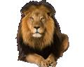 Lion Poli