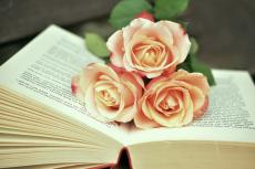 C.B. Rose